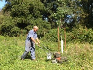 Jim Lee trims weeds around trees at Marks Slough Trail