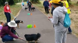 2018 Paws on the Pavement event