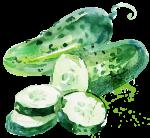 Cucumber watercolor