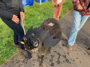 2019 bat sheep
