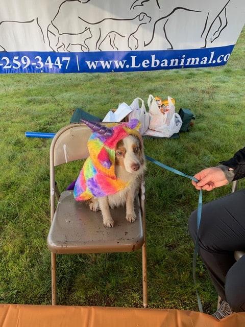 Patient dog in costume