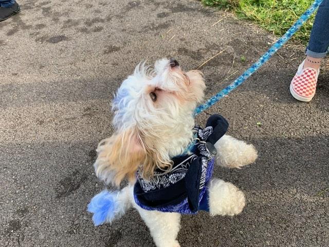 Doggie in costume